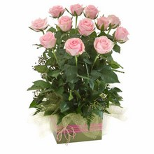 Box Arrangement of 12 Long Stemmed Pink Roses