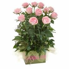 Box Arrangement of 12 Long Stemmed Pink Roses