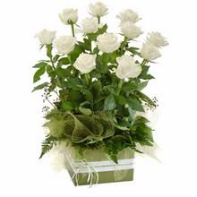Box Arrangement of 12 Long Stemmed White Roses