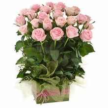 Box Arrangement of 24 Long Stemmed Pink Roses