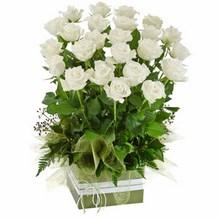 Box Arrangement of 24 Long Stemmed White Roses