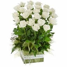Box Arrangement of 24 Long Stemmed White Roses