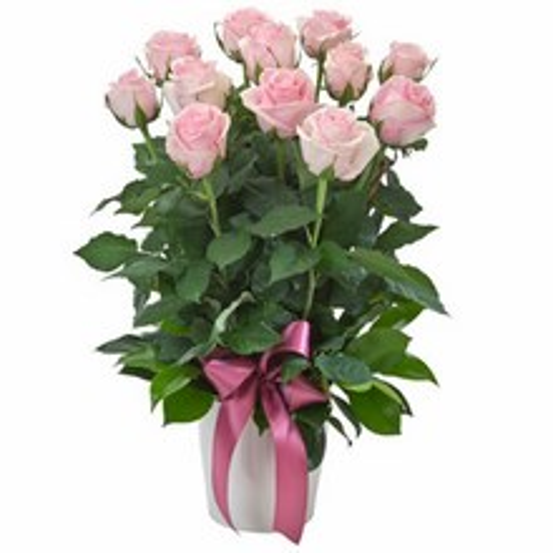 Arrangement of 12 Pink Roses in a Ceramic Pot
