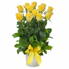 Arrangement of 12 Yellow Roses in a Ceramic Pot