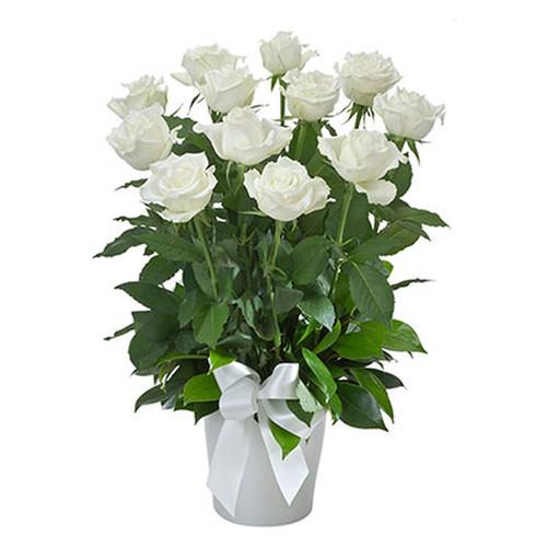 Arrangement of 12 White Roses in a Ceramic Pot