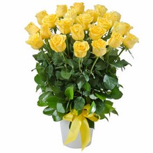 Arrangement of 24 Yellow Roses in a Ceramic Pot