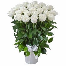 Arrangement of 24 White Roses in a Ceramic Pot