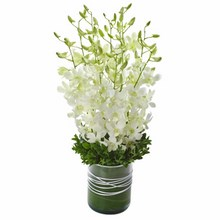 Orchid Presentation in a Glass Vase