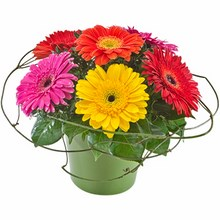 Mixed Gerberas in a Ceramic Container
