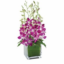 Orchids in a Glass Cube