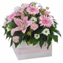 Mixed Box Arrangement Suitable for Home