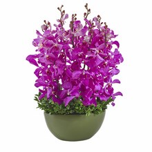 Orchids in a Ceramic Container